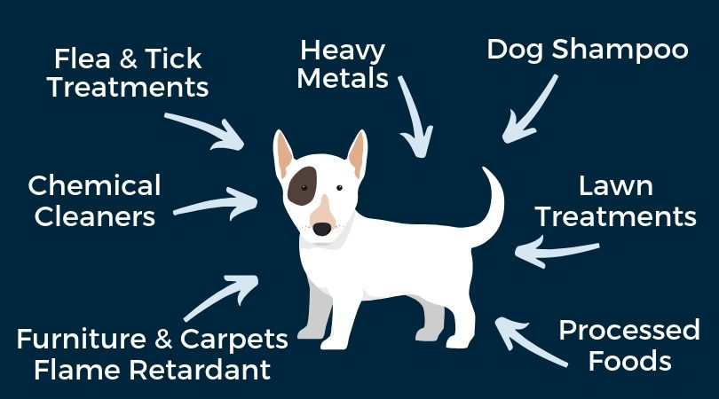 Reducing your dog's exposure to environmental toxins