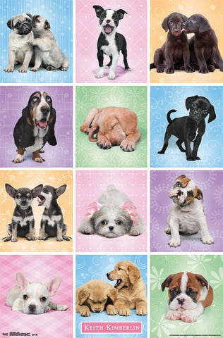 Puppies - Cuties Wall Poster 22x34 RP14199 UPC882663041992