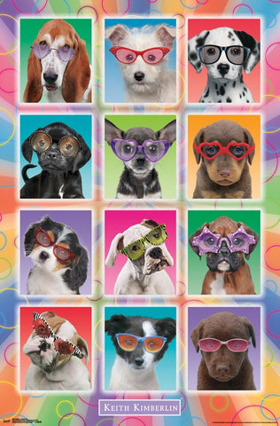 Puppies - Sunglasses Wall Poster 23x34 RP14919 UPC882663049196