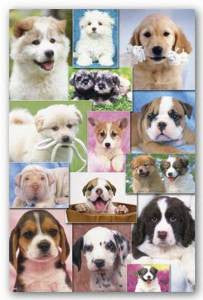 Puppies 2 Poster 22x34	 RP9898 UPC017681098981