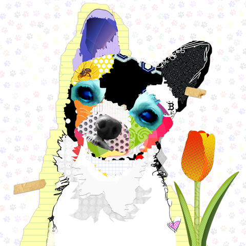 Chihuahua Dog Art.  Colorful Pop Art Chihuahua Dog Art Collage.  Chihuahua Art Canvas Prints.