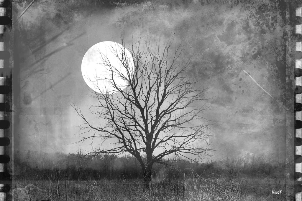 Vintage Film Lone Tree in Open Field Moonlight Photograph On Canvas