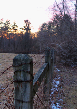 Art print of barbed wire fence post