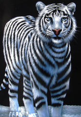 "White Tiger in Snow;  Original Oil Painting on Black Velvet ;  by Jorge Terrones -(size 18""x24"")-p2 J161"