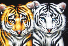 "Tiger Cubs; Bengal White ; Original Oil Painting on Black Velvet ;  by Jorge Terrones -(size 18""x24"")-px J183"