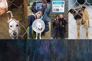 Dog Refuge Home Exhibition