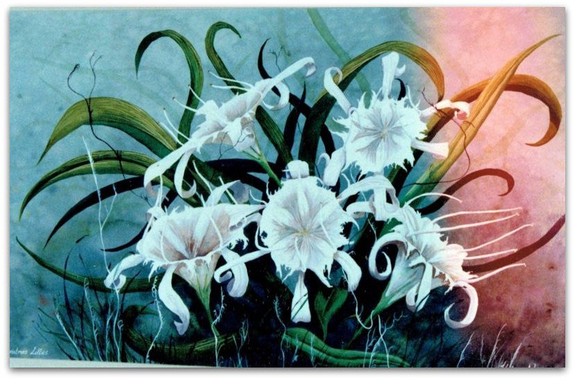 Christmas Lillies