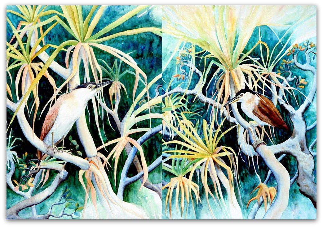 Rufous Night Herons pair