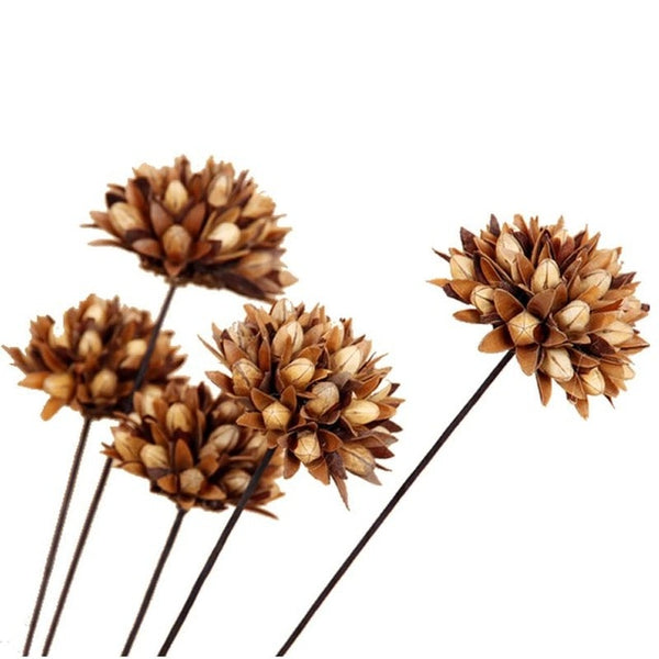 100% Natural Magnolia Dried Flower Small  Simulation Artificial Flower Household Dining Room Decoration Simulation Dried Flower
