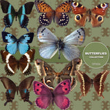 Butterflies Digital Paper DP3526 - Digital Paper Shop - 2