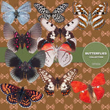 Butterflies Digital Paper DP3526 - Digital Paper Shop - 5