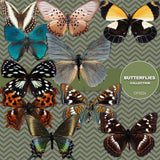 Butterflies Digital Paper DP3526 - Digital Paper Shop - 1