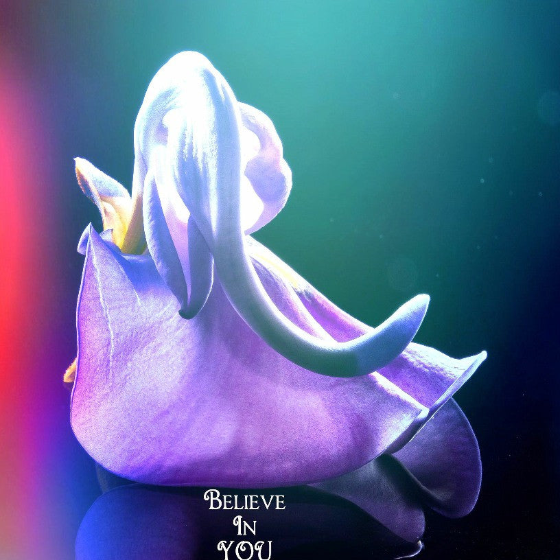 BELIEVE IN YOU - Spirit*Book WeeBook (Digital Download)
