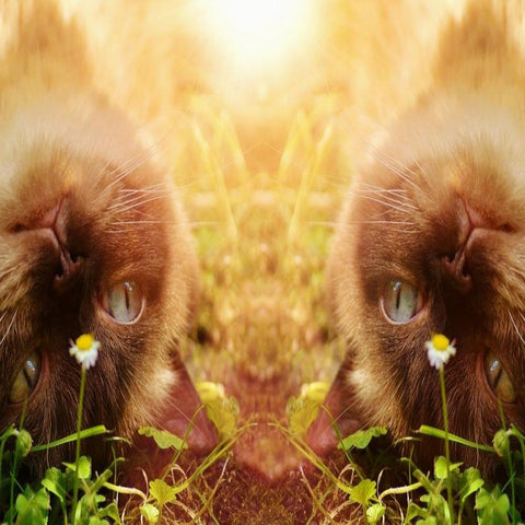 The Whisper Of Light - A Sacred Animal Connection