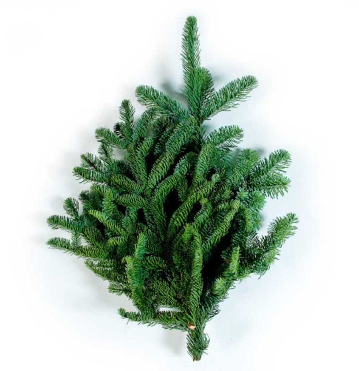 Noble Fir (25 pounds)