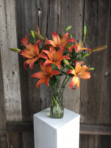 Royal Sunset LA Hybrid Lilies