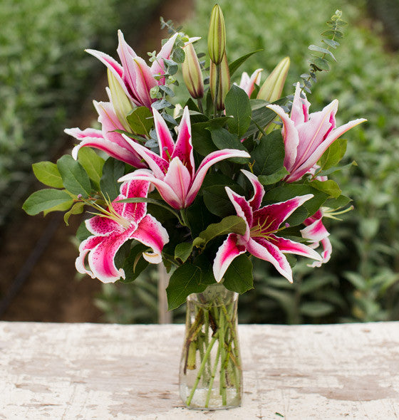 Pink Oriental Lily