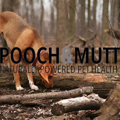 A Leader in Dog Health Supplements