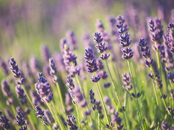 7 Must-Have Essential Oils