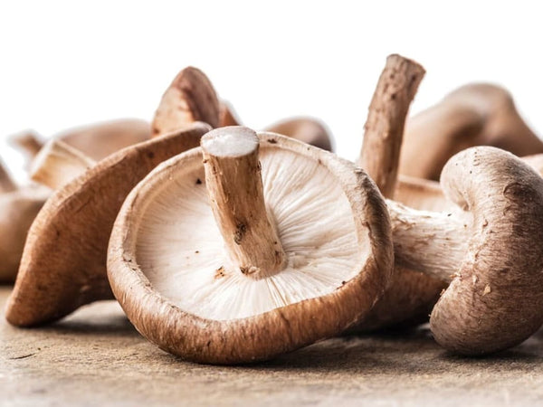 Medicinal Mushrooms Health Benefits