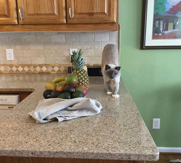 siamese cat stretching on the counter