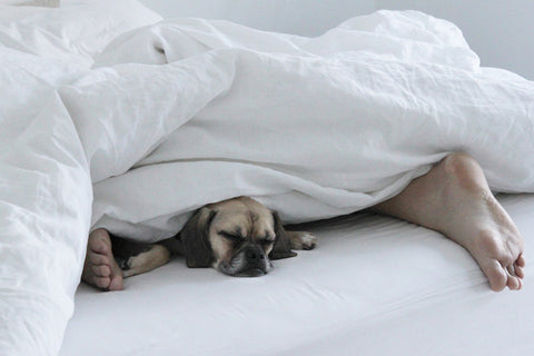 puggle in the sheets