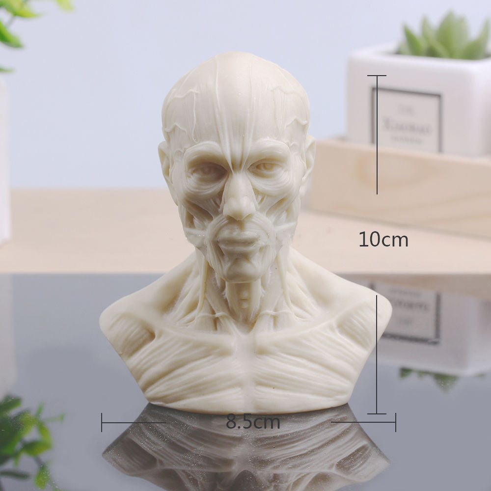 1:3 10cm Human Anatomy Skull Muscle Replica – Wondershop CO