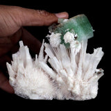 Green Apophyllite on Scolecite Spray Natural Mineral Specimen # B 3899  https://www.superbminerals.us/products/green-apophyllite-on-scolecite-spray-natural-mineral-specimen-b-3899  FeaturesA very aesthetic combination piece featuring a dark-brown matrix hosting numerous acicular sparks of color less to white, satiny Scolecite stalactite, along with a large, lustrous, green modified Apophyllite cube on it. Green apophyllite cube features some small scolecite sprays which is best in design