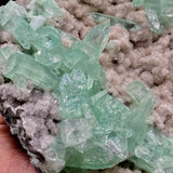 Green Apophyllite Sparkling Crystals on Heulandite Cluster # Q2  https://www.superbminerals.us/products/green-apophyllite-sparkling-crystals-on-heulandite-cluster-q2  Features:Sparkling cluster of green Apophyllite crystals in a radiating formation on matrix lined with creme-colored stilbite crystals in aggregates. The apophyllite crystals are fully terminated with vivd green color and glassy luster. Primary Mineral(s): ApophylliteSecondary Mineral(s): N/A Matrix: Heulandite
