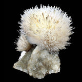 Features: 1. A self-standing specimen of a perfect round spray of mesolite formed at the top of the chalcedony stalactite. 2. The spray of mesolite includes crystals of calcite and the matrix includes crystals of apophyllite.  Dimensions: 20 CMS X 19 CMS Weight: 2450 gms  Locality: Pune, Maharashtra, India Year of Discovery: 2018  Superb Minerals brings the world one-of-a-kind collector specimens that have unrivaled quality. Each piece is as the day it was discovered in the Indian Earth, unaltered.