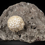 Mordenite Ball with Heulandite On Chalcedony Matrix # 20T73 Mordenite Superb Minerals
