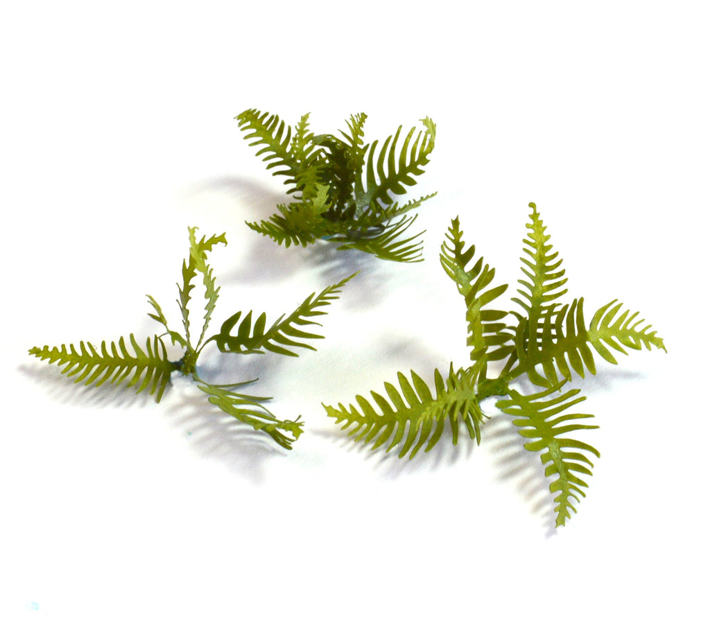 Fern Base Accessories
