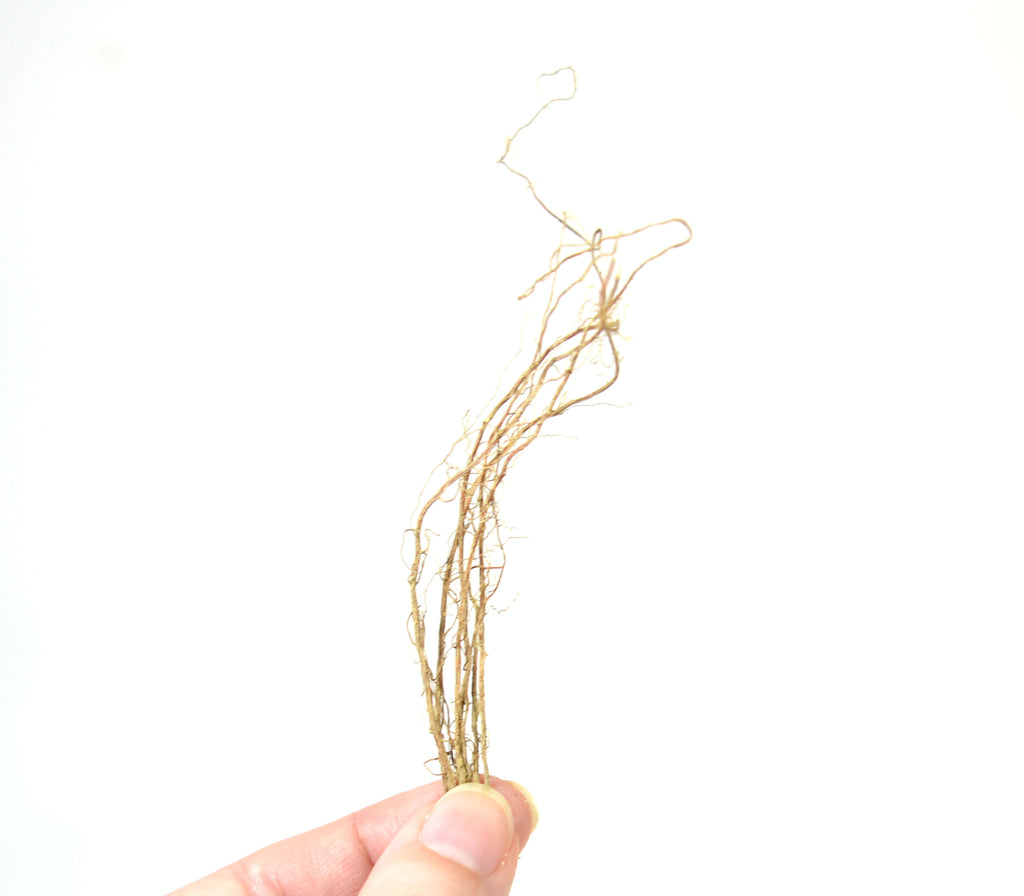 Micro Roots