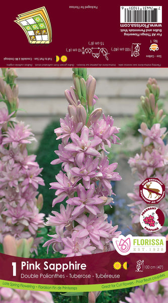 Tuberose Double Pink Sapphire