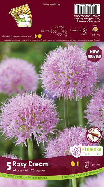 Allium Rosy Dream
