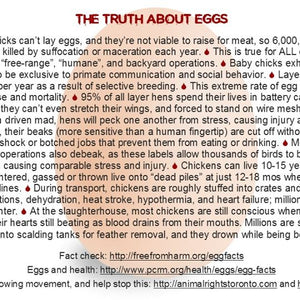 TRUTH About Dairy / Eggs (4x6) (pack of 50)