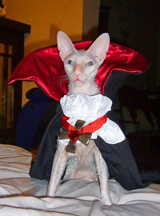 Children's Book - Catula, The Misadventures of Dracula's Cat