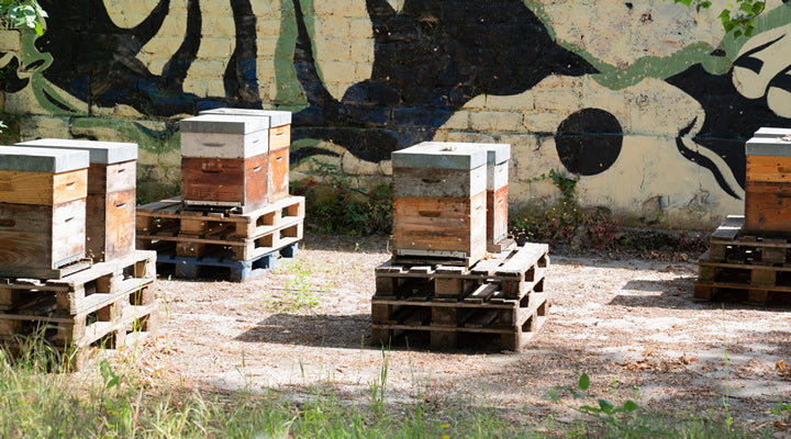City Beekeeping! What It Takes To Keep Bees in The Big City