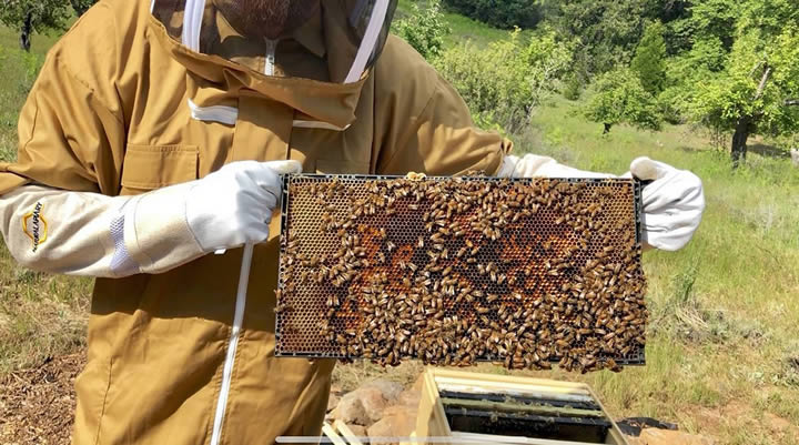 How Beekeeping Suits Help You