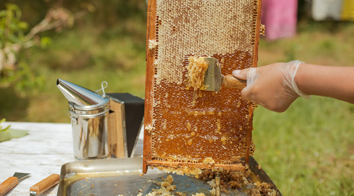 4 Key Pieces of Beekeeping Equipment You Should Know About