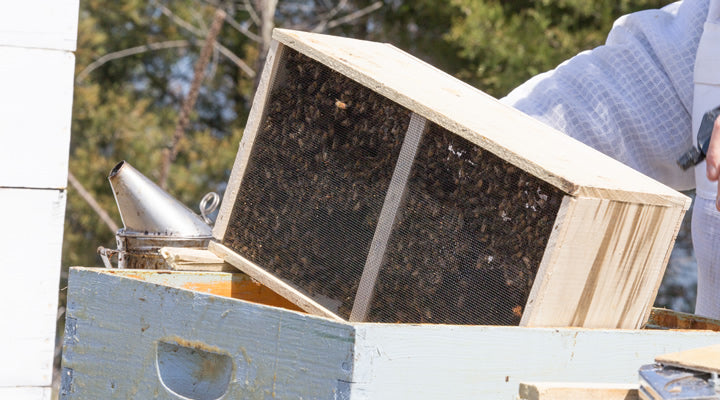How To Install Your New package of Bees