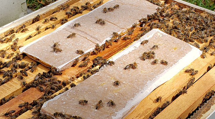 Influence of Protein Surplus and Deficit on Worker Bees and Their Colonies