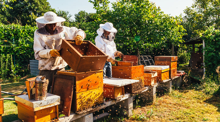 diy backyard beekeeping a guide for beginners