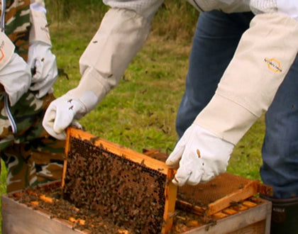 Beekeeping Goves and beehive
