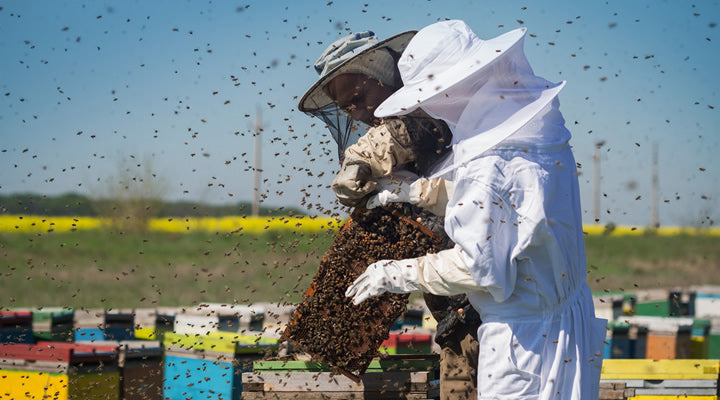 beekeeping suit and bee jacket in apiary with bees