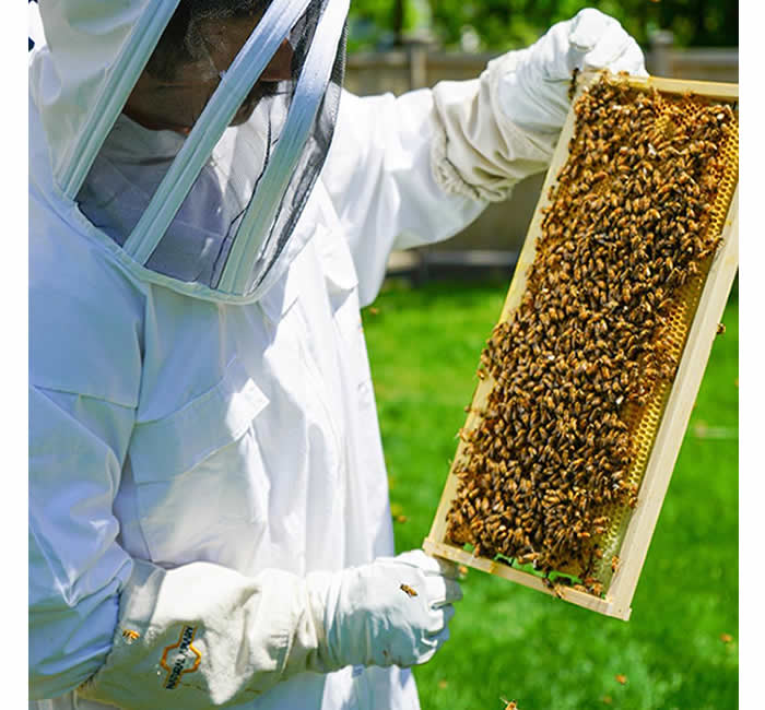 Ventilated Cotton Beekeeping Suits and gloves