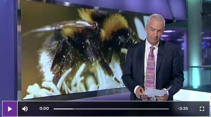 Bee decline 'not caused by pesticides'