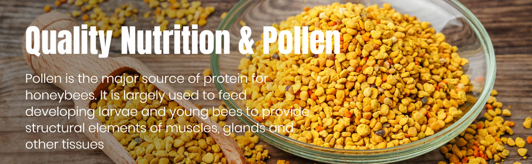 Quality Nutrition and Pollen