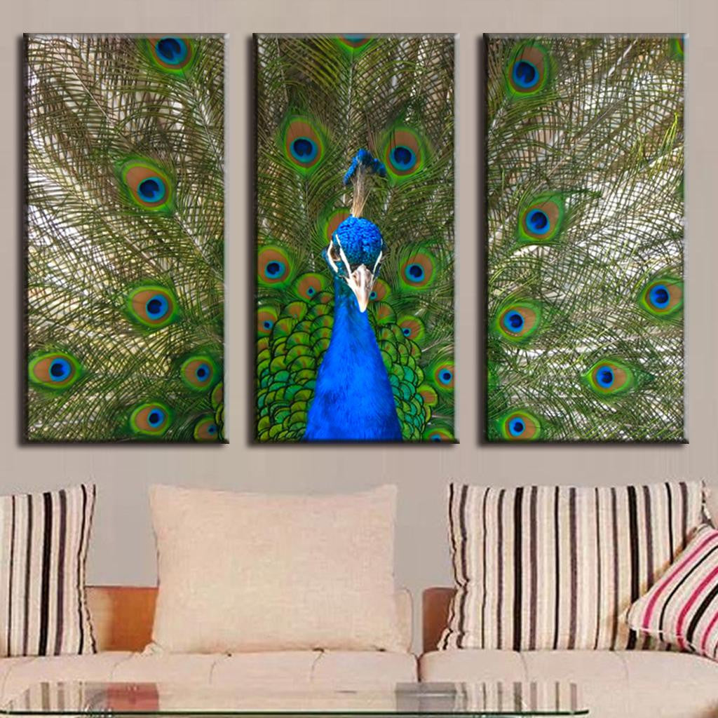 Peacock and Feathers