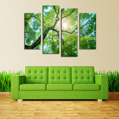 Sunlight Behind Tree - 4 Panel Canvas - BigWallPrints.com - 1